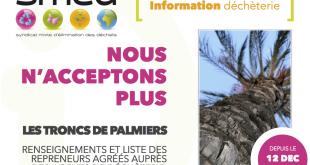 Tronc de palmier : cliquez pour plus d'info